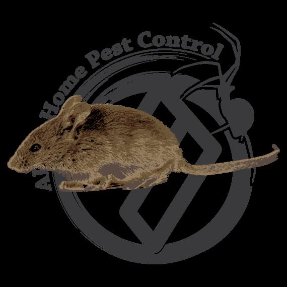Mice Exterminator