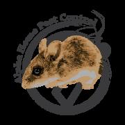 Deer-Mice